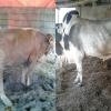 Inilah 8 Peluang Usaha Ternak yang Potensial Dibudidayakan di Indonesia