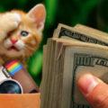 tips dapat penghasilan dari nstagram 120x120 » Cara Mendapat Uang dari Instagram dalam Waktu Kurang dari 3 Bulan