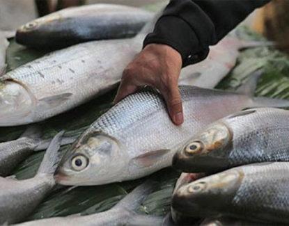tips budidaya ikan bandeng dengan kolam terpal 415x325 » Cara Mudah Budidaya Ikan Bandeng di Kolam Terpal