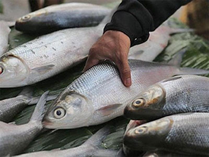 tips budidaya ikan bandeng dengan kolam terpal » Cara Mudah Budidaya Ikan Bandeng di Kolam Terpal